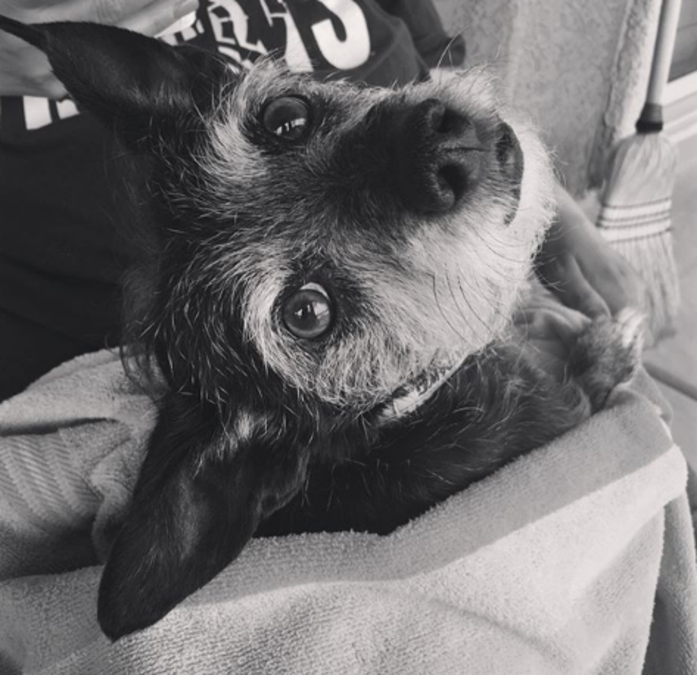 Family dog dies while in the care of a tucson petsmart kgun9 m4hsunfo