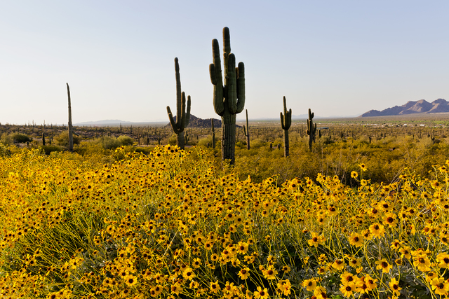 Best places to hike in the Tucson area