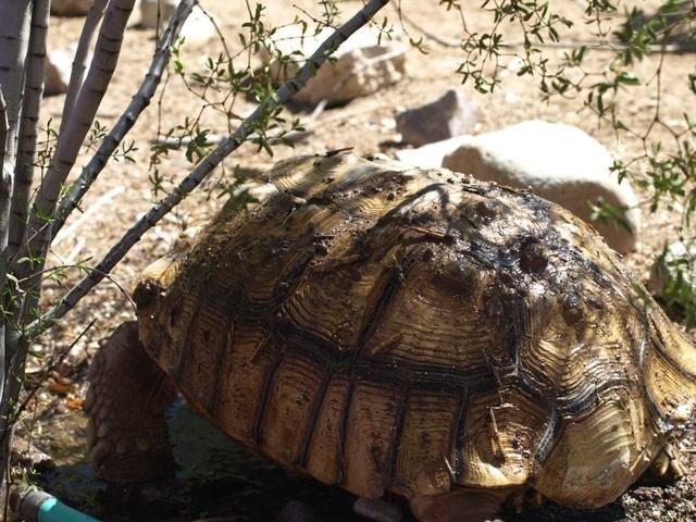 Channel 4 dating tortoises