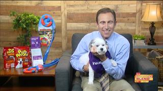 Pupperoni and more: Dr. Jeff Werber's pet tips