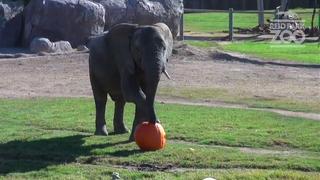 Reid Park Zoo animals celebrate halloween