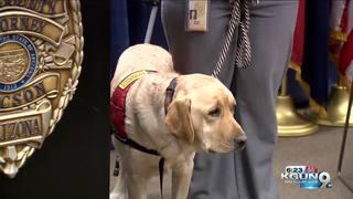 Pima County's Courthouse Dog Program expands